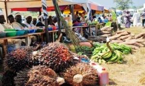 Farm produce displayed at the 2013 national agricultural show in Tudun Wada Nasarawa State, recently. Photo: NAN