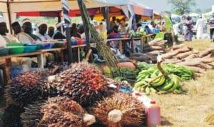 Farm produce displayed at the 2013 National Agricultural Show in Tudun Wada, Nasarawa State, recently. Photo: NAN