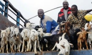Livestock traders off-loading their goats in Zaria last Thursday. Photo: NAN