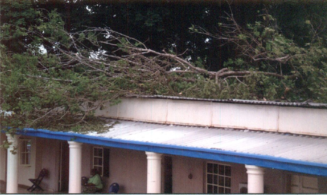 Office of the Sole Administrator, Rivers State Christian Plgrims Welfare Board when a tree fell on part of the office, at the secretariat complex in Port Harcourt recently.                                               Photo: Chris Monyanaga.