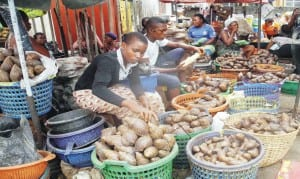 Traders displaying snails for sale at Oyingbo Market in Lagos. This is the holy week, two days before the Good Friday, when some christians eat snail instead of meat, to mark the crucifixion of Jesus Christ.                                    Photo: NAN