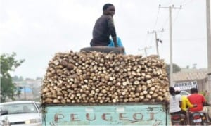 A lorry load of cassava produce being conveyed to the market in Nasarawa State