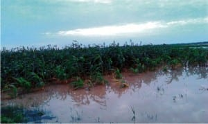 Flooded farmlands in Wurno Local Government Area of Sokoto State on Friday