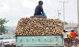 Vehicle loaded with cassava being transported to the  market in Nasarawa State recently