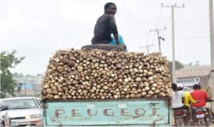 Cassava produce being transported to the market in Nasarawa State